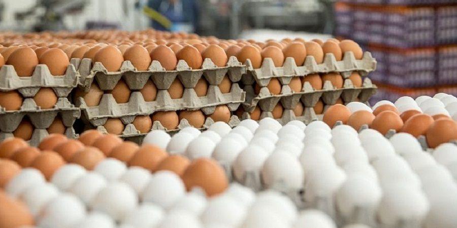 قیمت تخم مرغ دوباره رکورد زد/ هرشانه ۳۳ هزار تومان