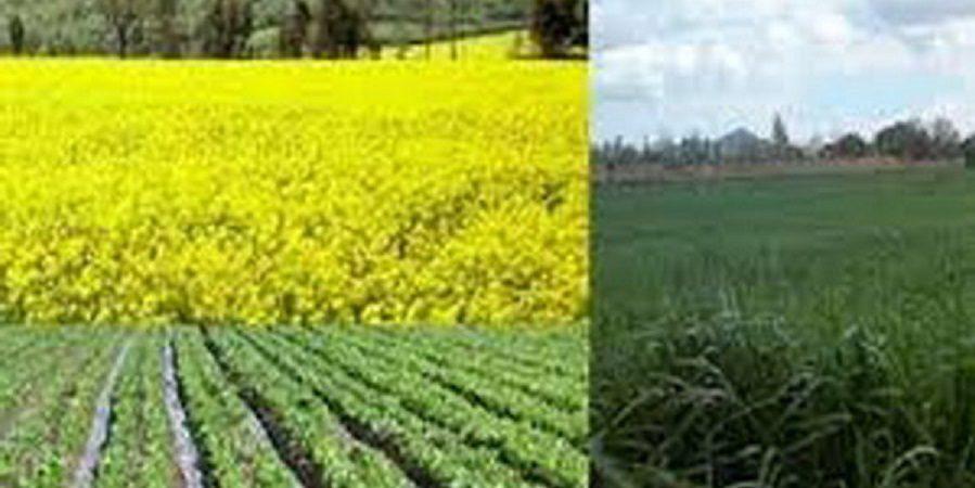 یک مقام شرکت مدیریت منابع آب ایران:کشت پاییزه در سال آینده کاهش می یابد