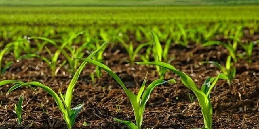 رئیس مرکز فناوری اطلاعات وزارت جهاد کشاورزی: اجرای طرح پایش محصولات کشاورزی در ۷ استان