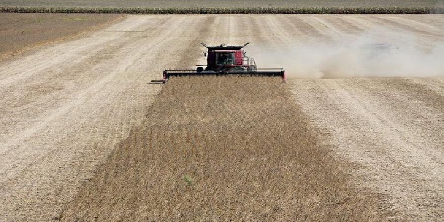 اجرای ۵ پروژه ارتقای امنیت غذایی در حوزه زراعتی و باغبانی