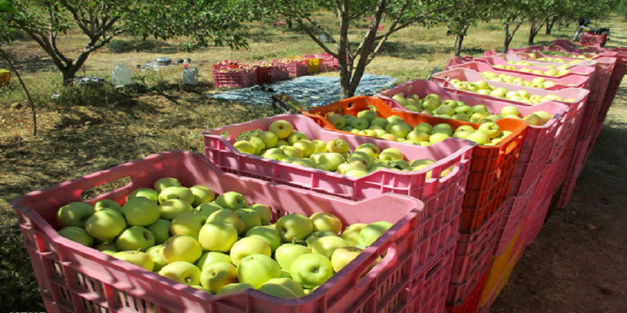 راه اندازی بزرگترین واحد سورتینگ سیب کشور در ارومیه