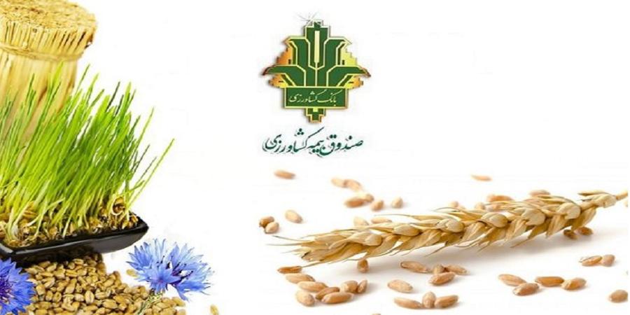 جهت تأمین نظر شورای نگهبان؛ طرح تعیین تکلیف کارشناسان بیمه کشاورزی اصلاح شد