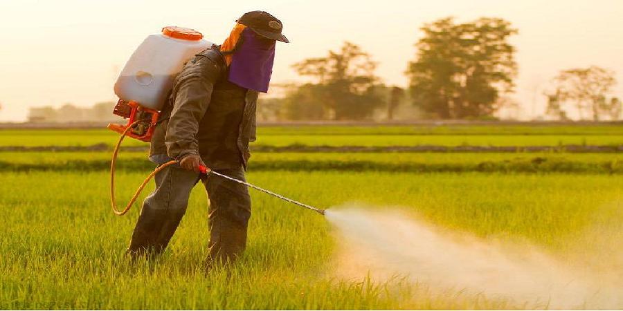 حذف ۱۲ سم پرخطر پس از دهه ها استفاده در بخش کشاورزی