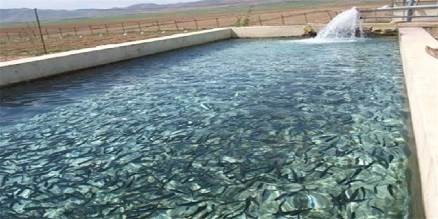 برآورد تولید یک میلیون قطعه لارو ماهی سیباس