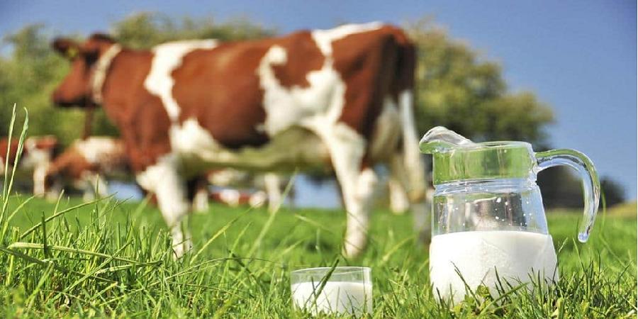 تولید ۲.۶ میلیون تن شیر در نیمه اول امسال