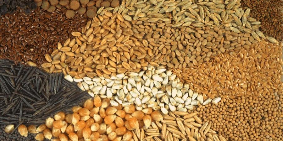 معاون فنی سازمان تعاون روستایی مطرح کرد: تولید سالانه ۱۸۴ هزار تن بذر محصولات کشاورزی توسط تعاونیها
