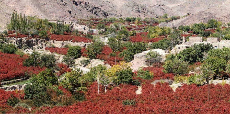 مزارع سرخ ؛ مقصد گردشگری پاییزی