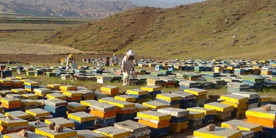 اختصاص ۱۷ هزار تن شکر برای زمستان گذری زنبورداران کشور