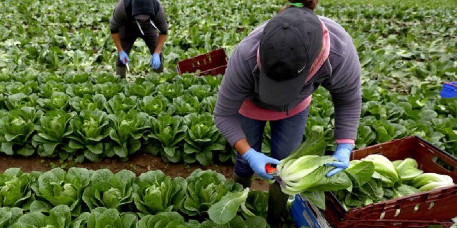 کمبود نیروی کار در بخش کشاورزی و صنایع غذایی در کشورهای اروپایی به علت بحران کرونا مشکل ساز شد