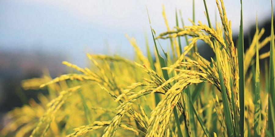 هشدار فائو درباره پیامدهای عدم اتخاذ سیاستهای مناسب در دوران همهگیری بیماری ویروس کرونا بر امنیت غذایی میلیاردها نفر در منطقه آسیا و اقیانوسیه