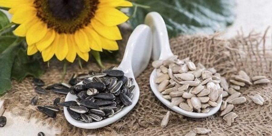 آذربایجان غربی رکوردار تولید تخم کدو و آفتابگردان آجیلی در کشور