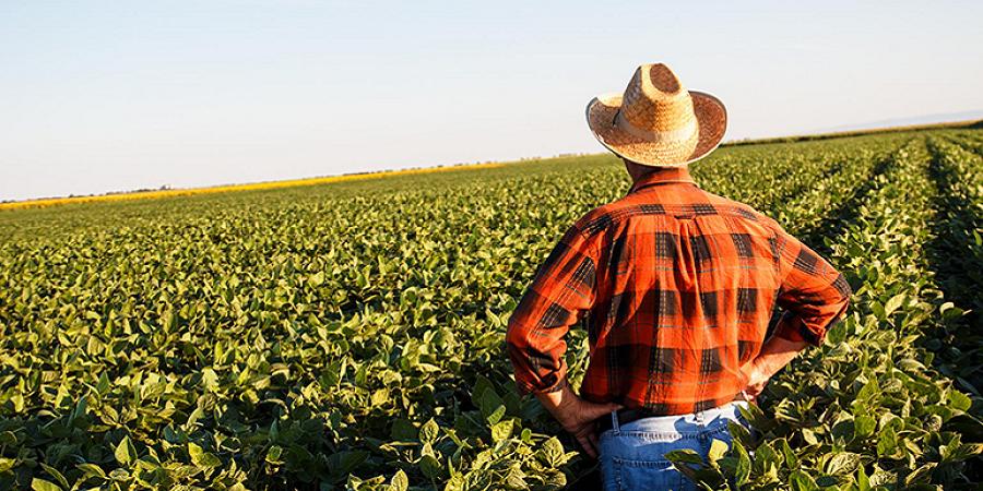 کشاورزان انگلیس نگران تبعات خروج از اتحادیه اروپا هستند
