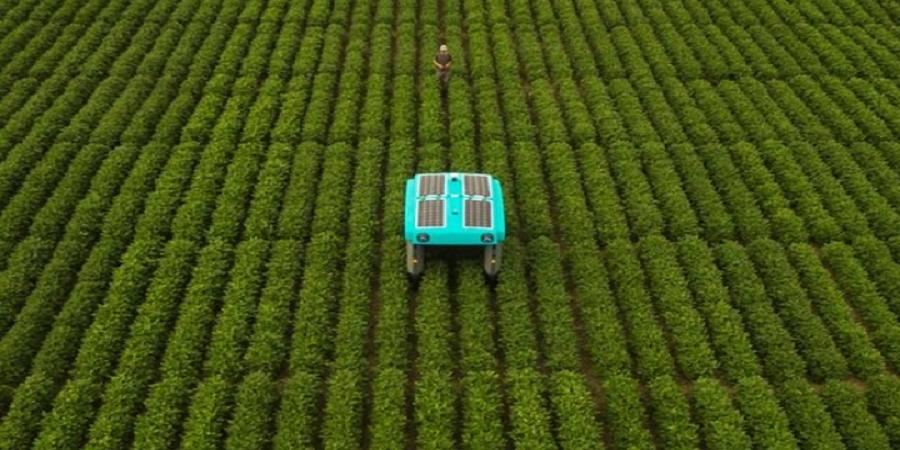 رباتی که تک تک گیاهان مزارع را رصد میکند