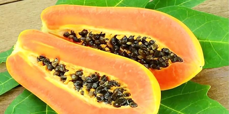 خواص خربزه درختی یا «پاپایا» که احتمالا چیزی از آن نمیدانید