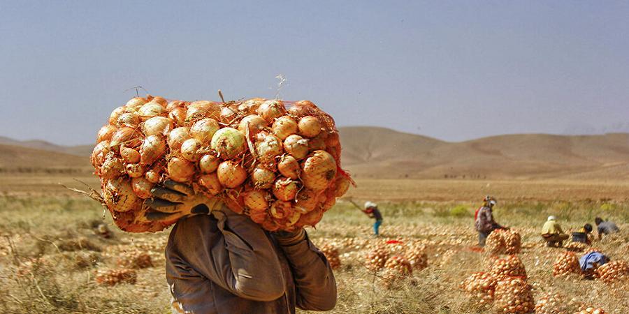 جایگاه کشاورزان در سند ملی امنیت غذایی دیده شود