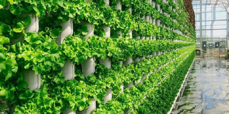 ساخت پارک جدید در دبی برای کشاورزی عمودی